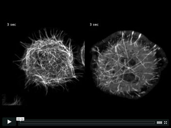 Video Credit: Goodwin, S.S., and Vale R.D.