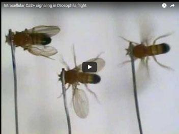 Video Credit: Venkiteswaran, G. & Hasan, G.